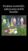 b_150_100_16777215_00_images_dzien_ziemi2021_cz2_9.png